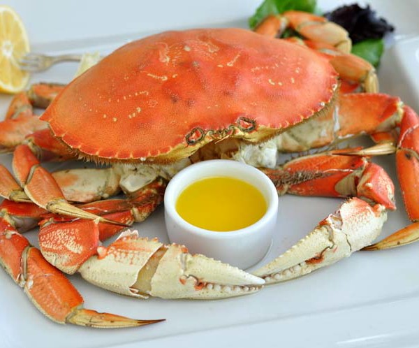 cooked Dungeness crab